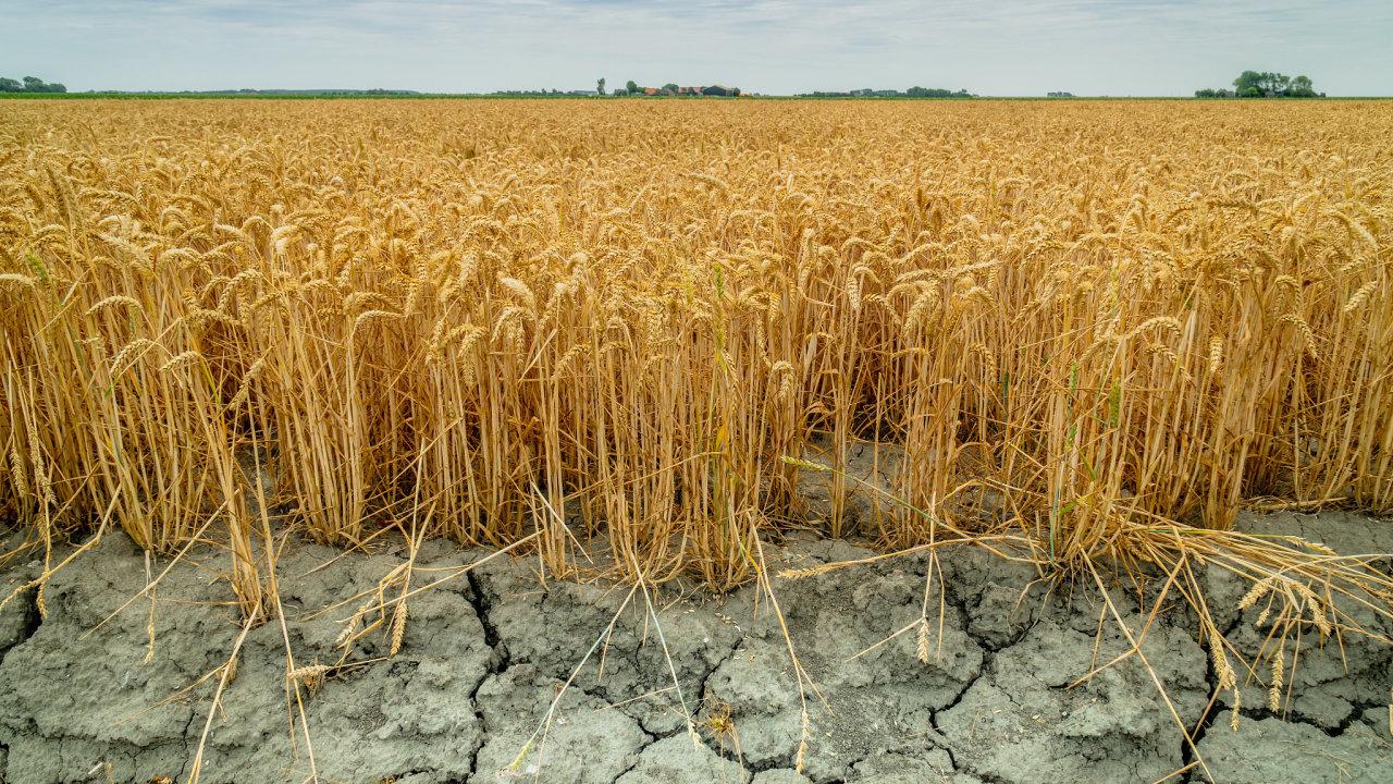 Pomoc v boji proti suchu