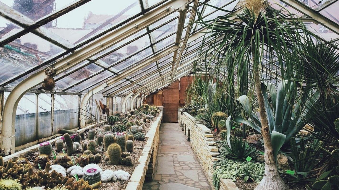 Jak využít skleník nejen k zahradničení