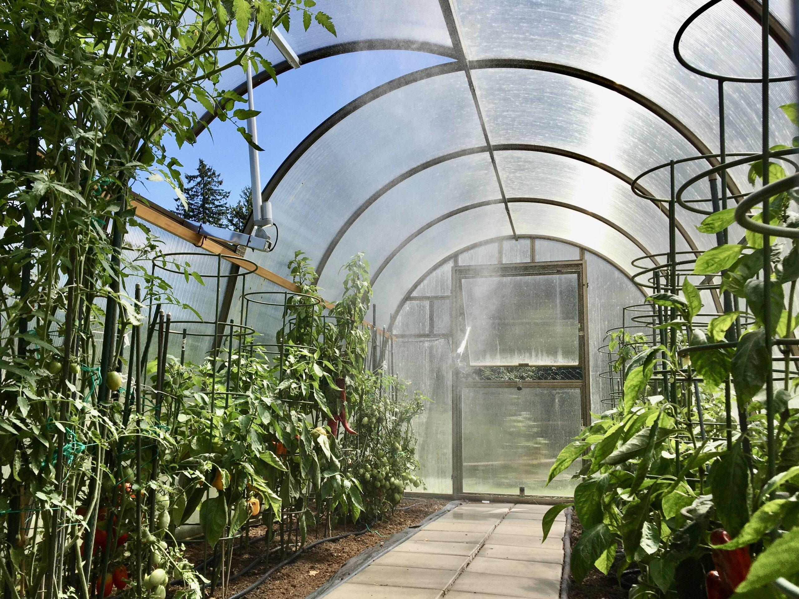 Začínáme s chytrým skleníkem